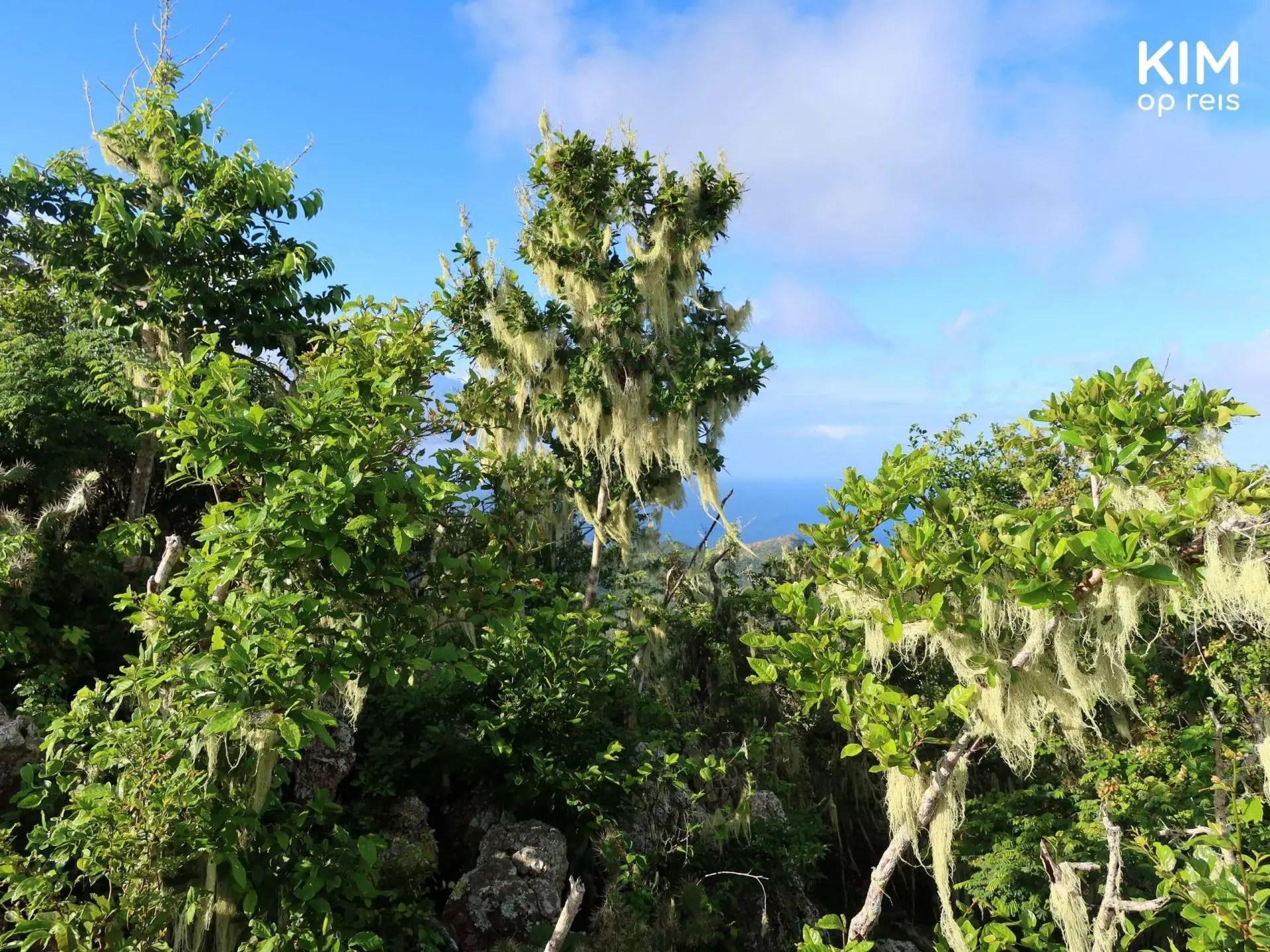 Begroeiing top Christoffelberg Curaçao