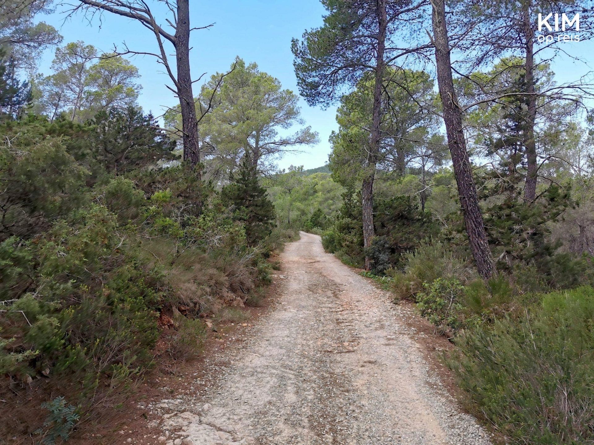 Walking tour Ibiza - unpaved walking path in a forest area