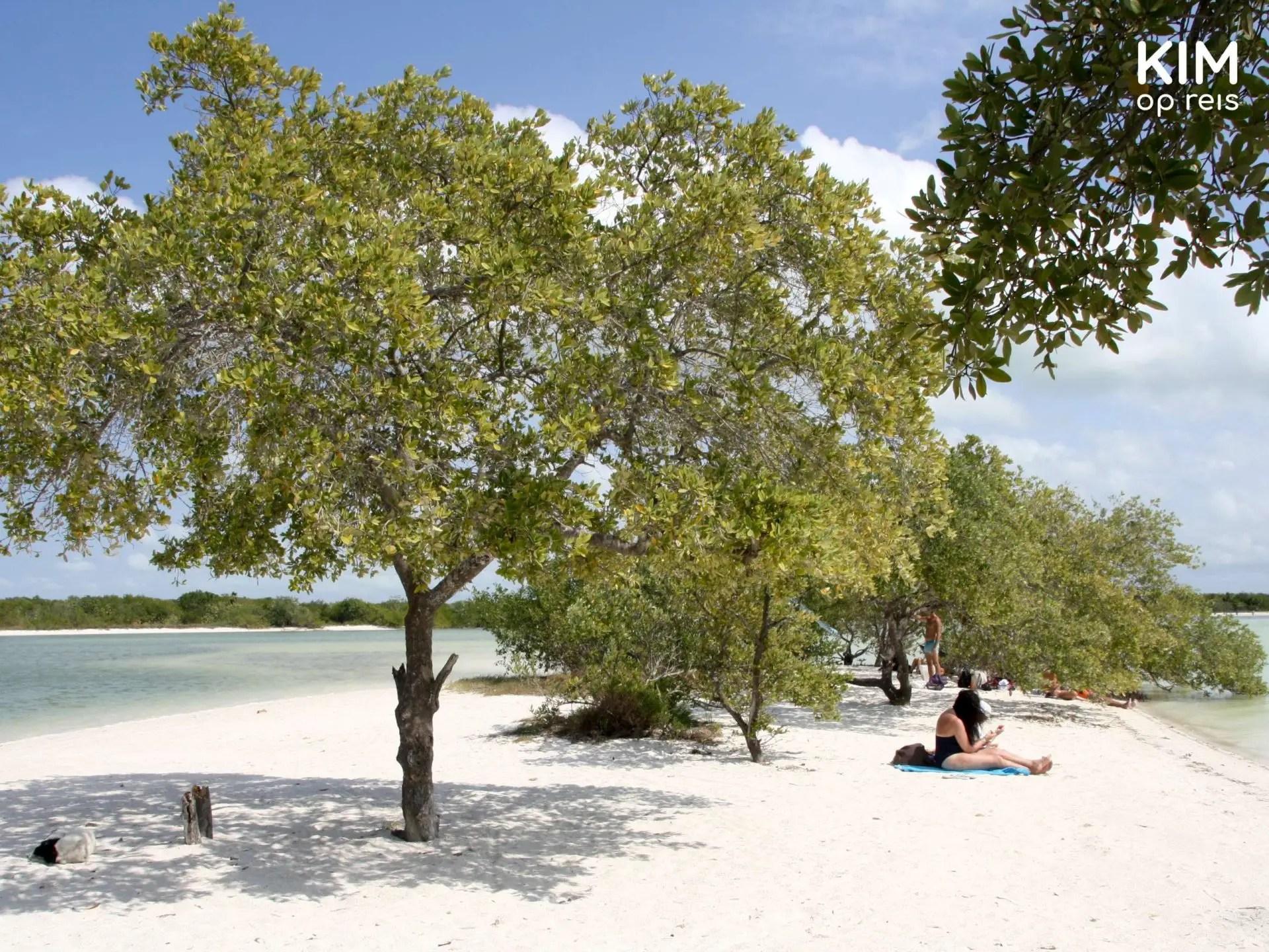 Isla Holbox strand bomen: strand met daarop enkele bomen