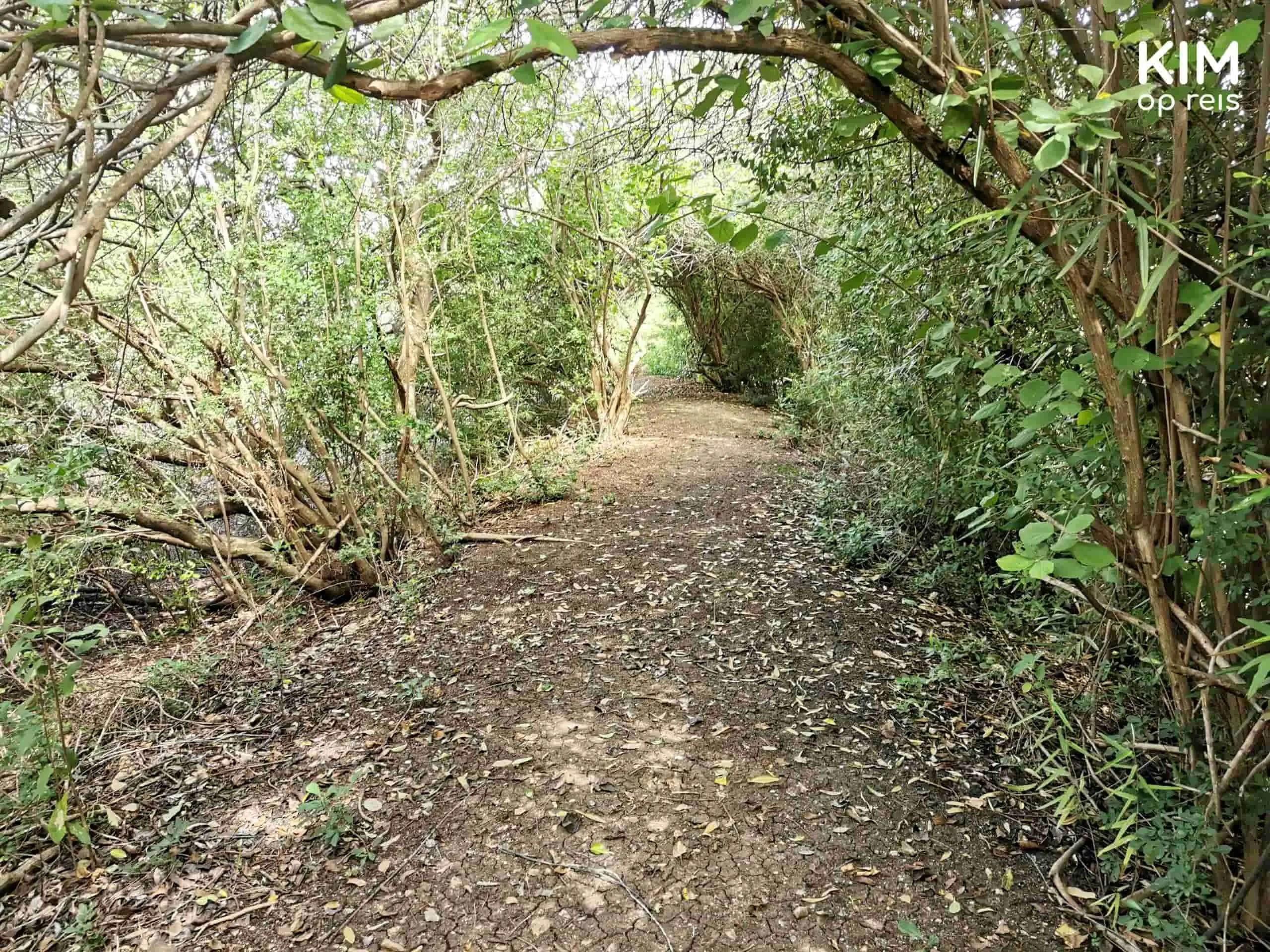 Tuin wandelen Landhuis Bloemhof: begroeid wandelpad