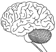 brain is a complicated thing