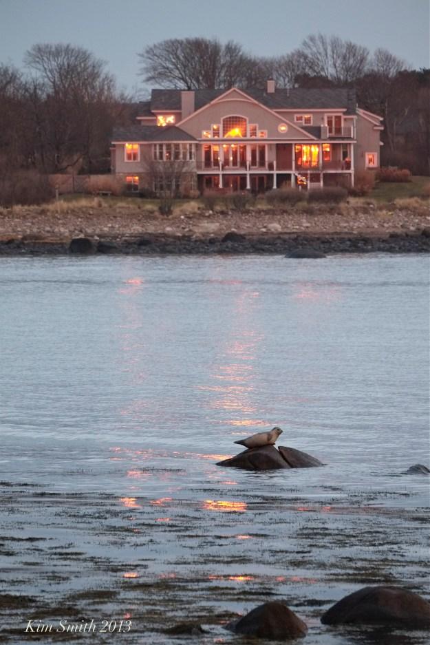 Brace Cove Haror Seal copy