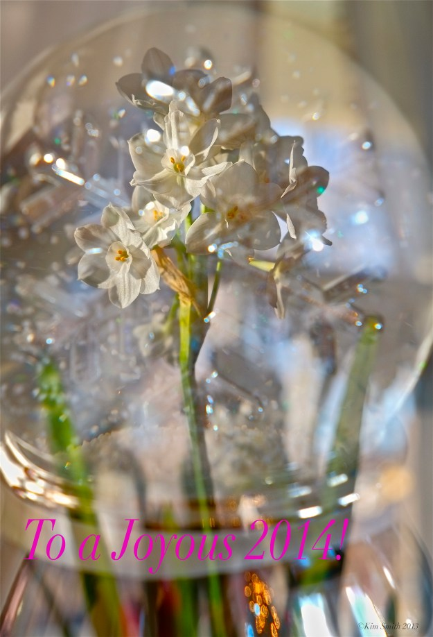 Happy New Year Snow Globe paperwhites -2 ©Kim Smith 2013 copy