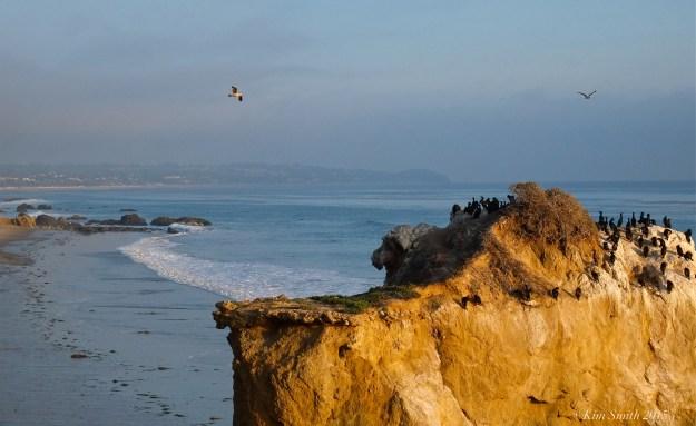 El Matador Beach commorants ©kim Smith 2015