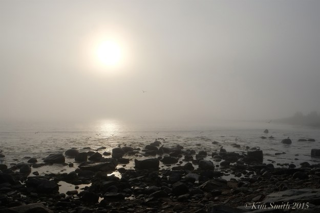 Brace Cove fog Gloucester MA ©Kim Smith 2015JPG
