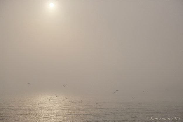Brace cove fog seagulls ©Kim Smith 2015