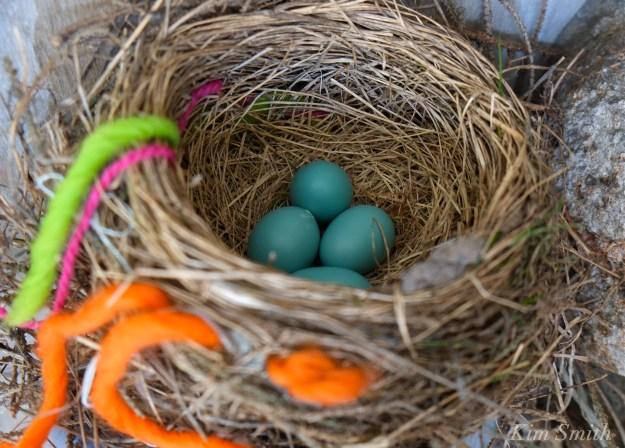 Robin's Nest copyright Kim Smith
