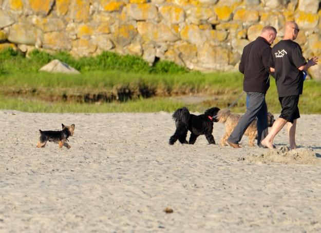 Good harbor Beach no dogs copyright Kim Smith