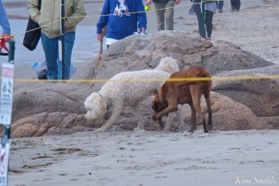 dogs-in-nesting-area-2-copyright-kim-smith