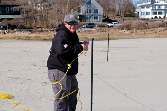 Piping Plovers Good Harbor Beach Gloucester Massachusetts copyright Kim Smith - 08