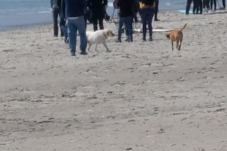 Dog Disturbance Good Harbor Beach Gloucester 4-6-19 c Kim Smith - 05