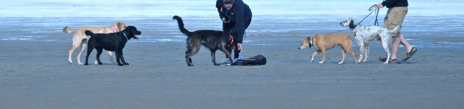 Dog Disturbance Good Harbor Beach Gloucester 4-6-19 c Kim Smith - 29