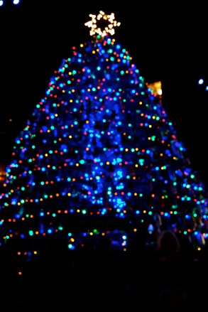 Lobster Trap Tree Lighting Gloucester MA 2019 copyright Kim Smith - 37