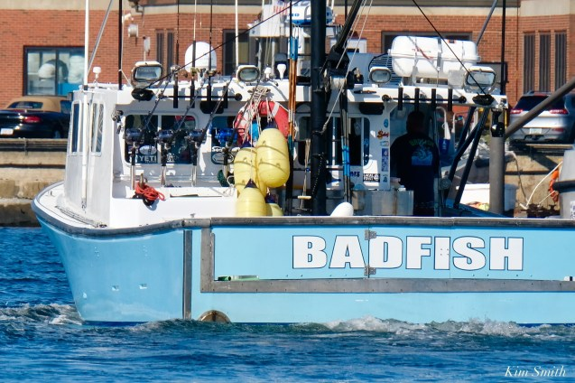 Wicked Tuna Filming Gloucester Harbor Bad Fish copyright Kim Smith - 8 of 10
