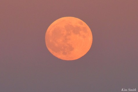 Full Beaver Moon Frost Moon Gloucester copyright Kim Smith - 14 of 18