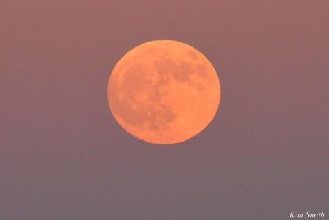 Full Beaver Moon Frost Moon Gloucester copyright Kim Smith - 14 of 18