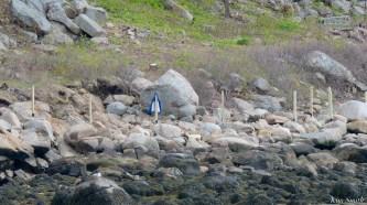 #savesaltisland Salt Island Gloucester MA copyright Kim Smith - 1 of 14