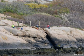 #savesaltisland Salt Island Gloucester MA copyright Kim Smith - 2 of 14
