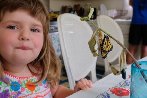 Monarchs emerging and Charlotte copyyright Kim Smith - 7 of 13