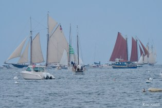 Schooner Parade of Sail Gloucester 2021 copyright kim Smith - 51 of 52