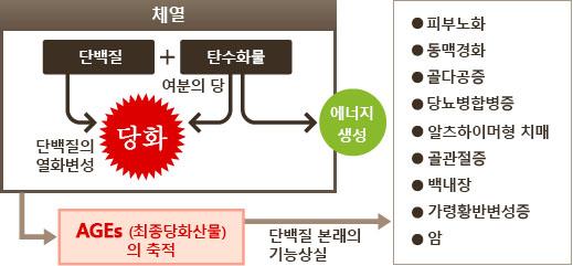 당화작용 노화의 원인 당화(糖化), 탄수화물 외 음주와 밀접한 관련