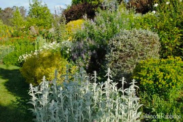 A fresh colour play in mint, grey, lime and lemon… stachys, euphorbias and tree lupins are amongst the stars.