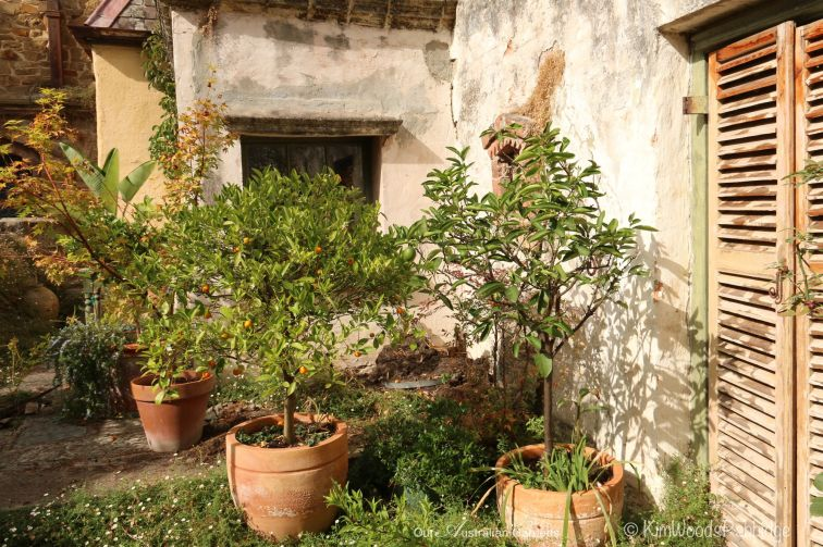 Near Luthier's Cottage - potted citrus are handy for residents to harvest.