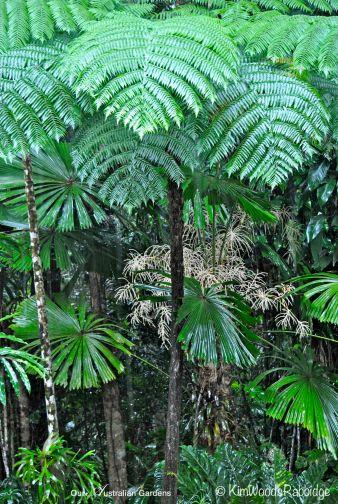 Tree fern fronds.