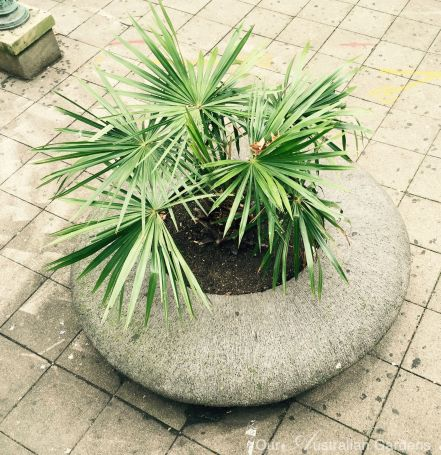 Plenty of space for this palm.