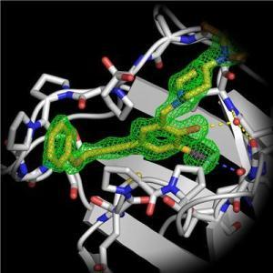 Bağlayıcı cebince bulunan halojen bağı (mor çizgiler) ile etkileşen aktifleştirilmiş küçük bir molekül ile mutasyona uğramış tümör baskılayıcı gen p53 ün kristal yapısının bir parçası bağlanmıştır. Yeni sınıf maddelerin bileşikleri p53 ile etkilenen kanser hücreleriyle etkinleşiyor. (Credit:Prof. Frank Böckler)