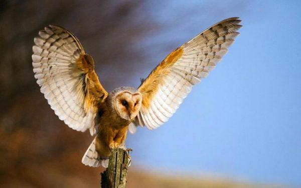 Птицы средней полосы россии фото и названия. Птицы средней ...