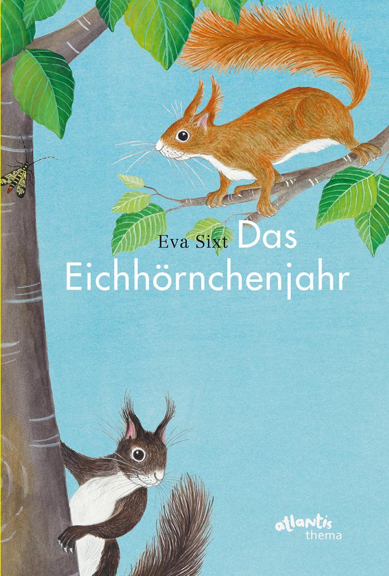 Das Eichhörnchenjahr – ein Bilderbuch über Eichhörnchen
