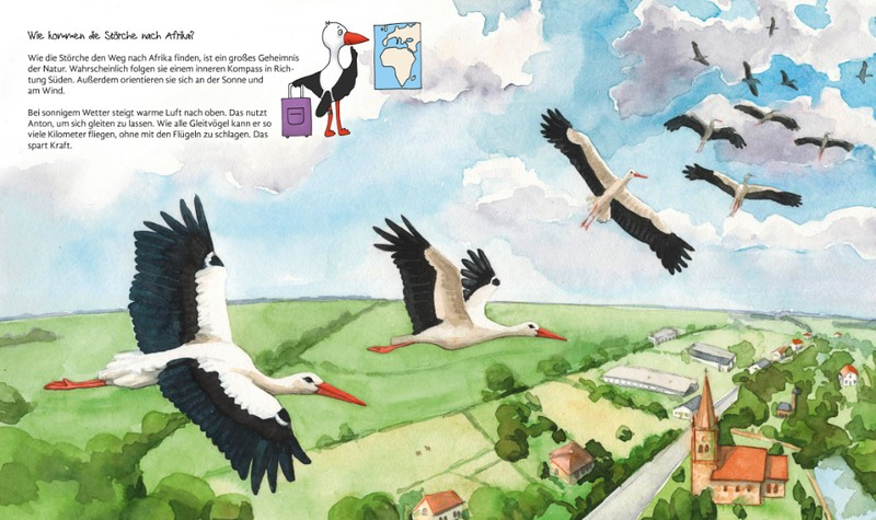 Störche auf dem Weg in den Süden - Was macht der Storch im Winter?