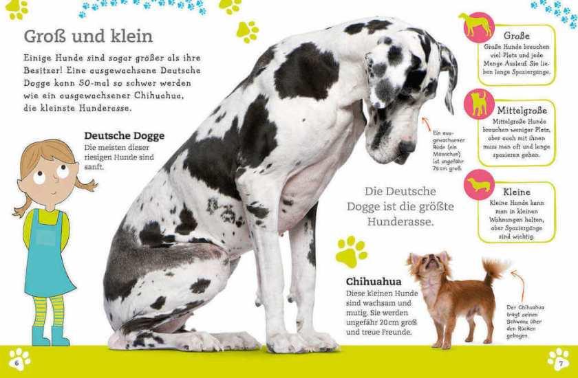 Alles über deinen Hund - Ein Kinderbuch über das Haustier Hund