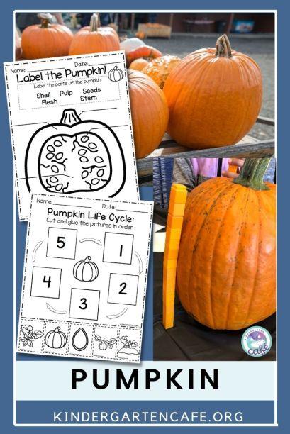 life cycle of pumpkin