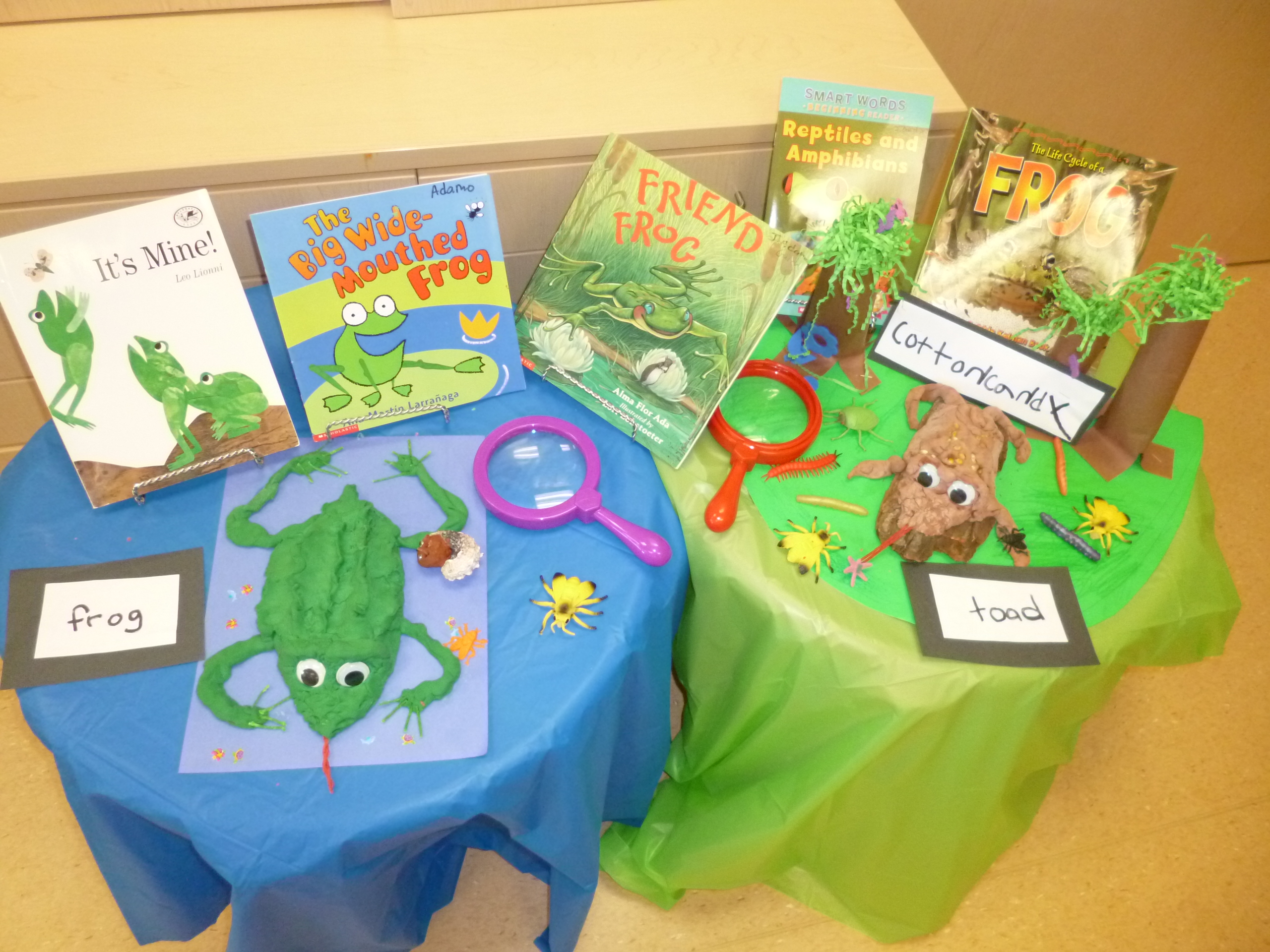 Frog Vs Toad Inquiry Continued