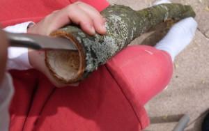 Schnitzen hat auch mit Kraft zu tun. Hier höhlen wir den Ast aus.  foto (c) kinderoutdoor.de