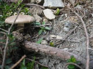 Ungefähr 6.000 Pilzarten gibt es in Mitteleuropa. Ihr könnt sie nicht alle kennen, aber bitte die wichtigsten davon. foto (c) kinderoutdoor.de
