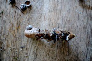 Kinder basteln mit Naturmaterialien. Jetzt bekommt die Fledermaus ihre Nase.  foto (c) kinderoutdoor.de