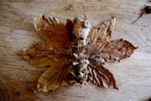 Beim Basteln im Herbst kleben die Kinder nun die Fledermaus ihr Flügel. foto (c) kinderoutdoor.de
