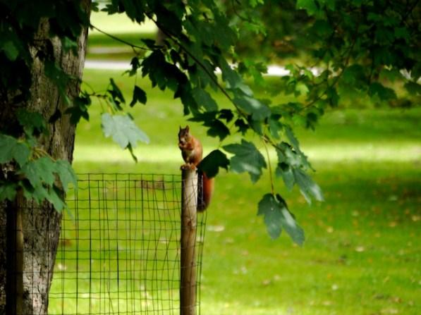 Bei der Wanderung zur Eichhörnchen kommt Ihr diesen Tieren ganz nahe. foto (c) kinderoutdoor.de