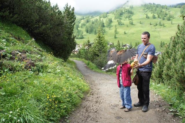 Habicht im Anflug. In Malbun, Fürstentum Liechtenstein, gibt es geführte Wanderungen mit Habicht oder Adler. foto (c) kinderoutdoor.de