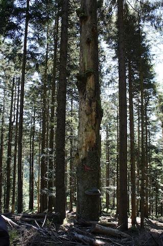 MItten im Wald, ohne fließend Wasser, ohne Strom und ohne Womos lässt es sich wunderbar zelten. foto (c) kinderoutdoor.de