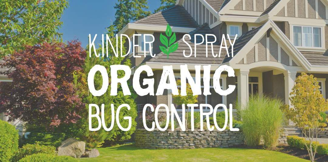Organic Bug Control for Indoor Pest Protection