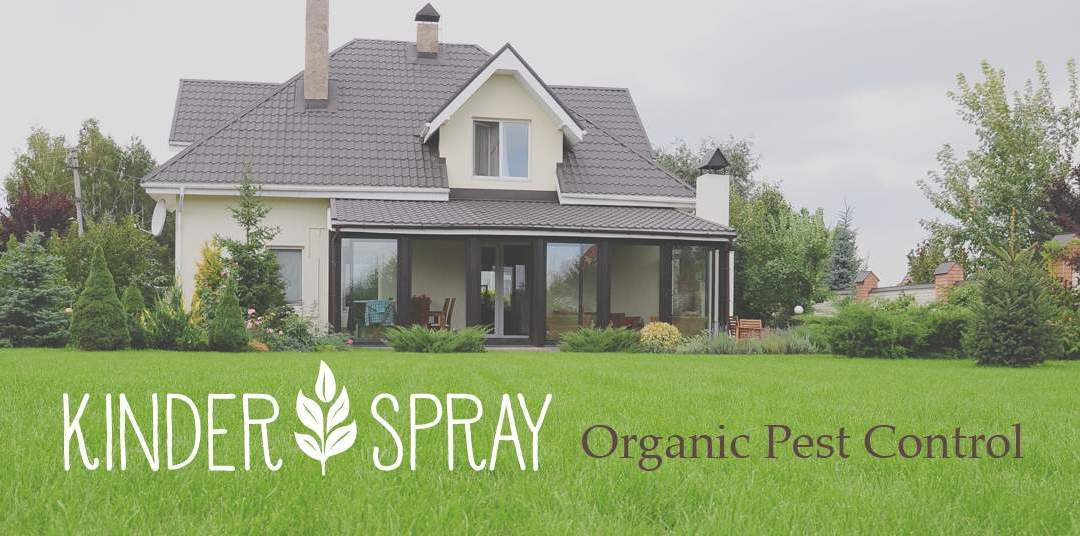 Organic Pest Control Companies like Kinder Spray Provide Safe Protection Against Insects