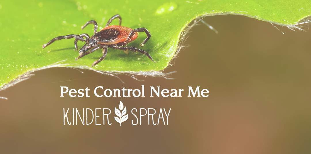Pest Control Near Me: Kinder Spray Provides Superior, Organic Options