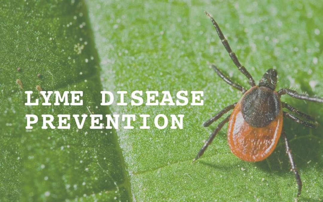 Lyme Disease Prevention This Season with Kinder Spray