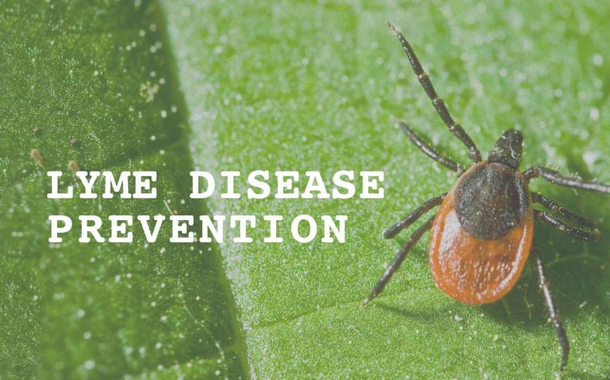 9474977e62861f Lyme Disease Prevention This Season with Kinder Spray