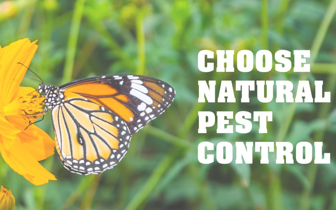 This Season, Choose Natural Pest Control Over Synthetic Pest Control