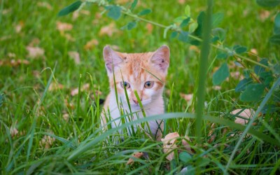 What Makes the Best Pest Control for Your Yard?
